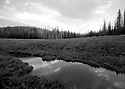 Landscape in black and white at Blewett Pass, in the Wenatchee Mountains, pond in a meadow. Stock photography by Olympic Photo Group