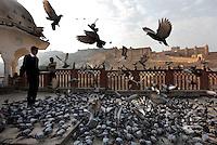 PK nr: 10475.Kategori: Natur og miljø.Tittel: .Bildetekst: En mann mater duer ved Amber Fort i Rajasthan, India. .Digitalt.Dato: 22.januar 2011.Sted: Rajasthan, India