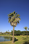Israel, Southern Coastal plain. Edith Wolfson Park in Ramat Gan