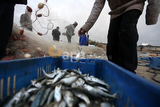Palestinian fishermen collect the fish from the nets during a storm on January 10, 2013 in Gaza City. In Gaza, cold weather and heavy rain flooded several of the tunnels running between the territory and Egypt as in the West Bank city of Ramallah, children and adults, including some policeman stopped their cruiser for an impromptu snowball fight. Photo by Majdi Fathi