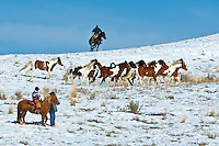 A working cowboy rounds up his rodeo stock from the high country as winter settles over the Uinta Mountains, Utah.