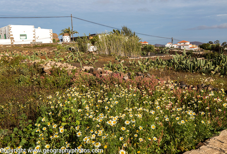 Traditional houses and gardens Villaverde village near Oliva, Fuerteventura, Canary Islands, Spain