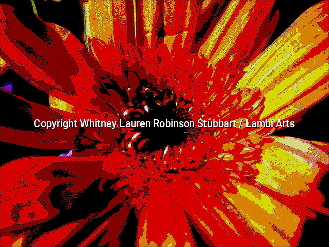 Digital Art Photography, Digital Effect Photography, Abstract Art Photography, Florescent, tapestry, photo painting, image manipulation, artistic photography, flowers, insects, food, animals, objects,