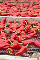 France, Aquitaine, Pyrénées-Atlantiques, Pays Basque, Espelette: Séchage des piment d'Espelette,   chez Ramuntxo Pochelu, L'Atelier du Piment  //  France, Pyrenees Atlantiques, Basque Country, Espelette: Drying Espelette Peper, L'Atelier du Piment