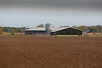 Free range hen barn <br /> &copy;Tim Scrivener Photographer 07850 303986<br />      ....Covering Agriculture In The UK....
