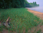 Apostle Islands National Lakeshore, WI<br /> Beach grasses and boreal forest along the shoreline of Sand Bay, Lake Superior