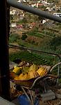 Pumpkins in wheelbarrow above terraced field, vallehermosa,La Gomera, Canary Islands, Spain.