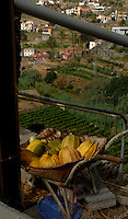 Pumpkins in wheelbarrow above terraced field, vallehermosa,La Gomera, Canary Islands, Spain.