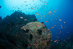 Canyons, Hard coral on the reef, Marco Vincent, Philippines, Puerta Galera, Verde Islands