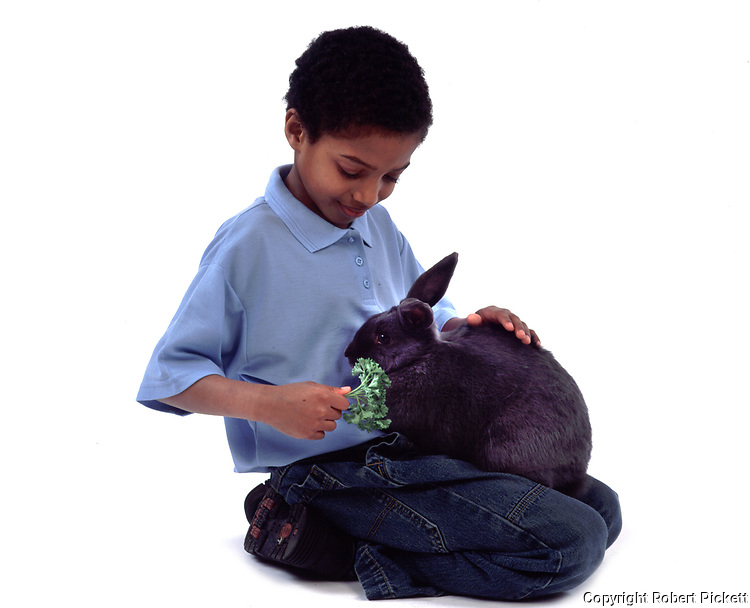 Young Boy feeding fresh food to Pet Rabbit, Tan & Black Colour, aged 10 years old, domestic, white background, cut out, studio,