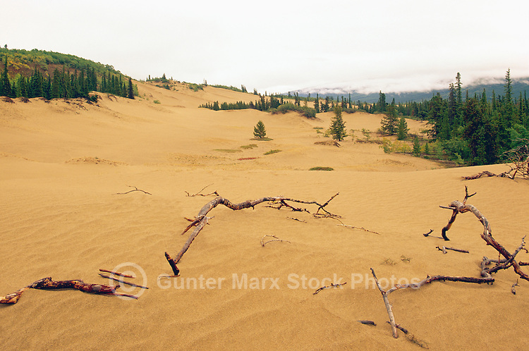 Carcross Desert near Carcross, YT, Yukon Territory, Canada - World's Smallest Desert