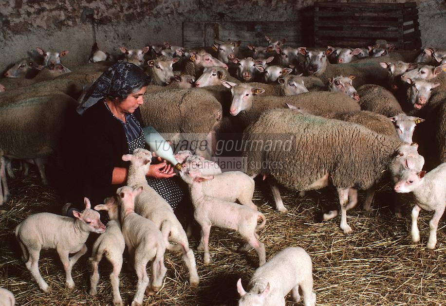 Europe/France/Limousin/87/Haute Vienne/Env de Laurière: la fermière faisant téter les agneaux au biberon dans la bergerie<br /> <br /> PHOTO D'ARCHIVES // ARCHIVAL IMAGES<br /> FRANCE 1980