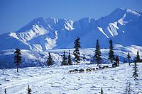 Mitch Seavey Leaving Rainy Pass Chkpt 1997 Iditarod  .To Rohn