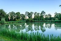 France, Loir-et-Cher (41), Cellettes, Château de Beauregard, dans le parc, étang aux carpes du fleuve Amour