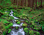 Olympic National Park, WA    <br /> A small stream flows over moss covered rocks through an old growth hemlock forest in Upper Soleduck Valley.