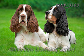 Marek, ANIMALS, REALISTISCHE TIERE, ANIMALES REALISTICOS, dogs, photos+++++,PLMP3183,#a#, EVERYDAY