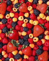 Agriculture - Mixed berries; red & golden raspberries, blackberries and strawberries, studio.