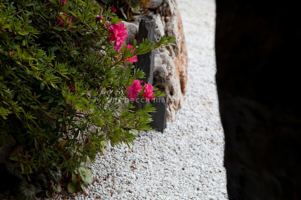 Flowers in the garden of Yoshi restaurant at the Metropole Hotel, Monaco, 23 March 2012