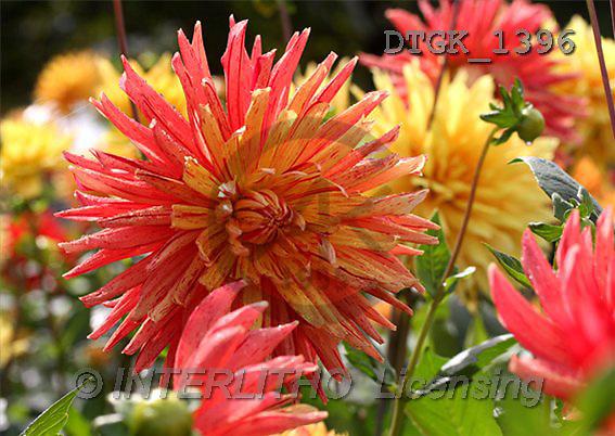 Gisela, FLOWERS, photos(DTGK1396,#F#) Blumen, flores, retrato
