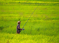 A fisherman in the lush green rice fields on the road between Siem Reap and Battambang the agriculture region of Cambodia