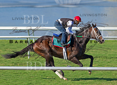 Gulfstream Park - Alex Solis riding - Flat Out turf workout January 1 2012