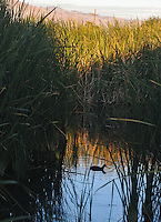 SWEETWATER WETLANDS PRESERVE