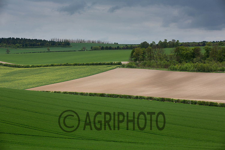 Farming landscape in Hertfordshire<br /> Picture Tim Scrivener 07850 303986