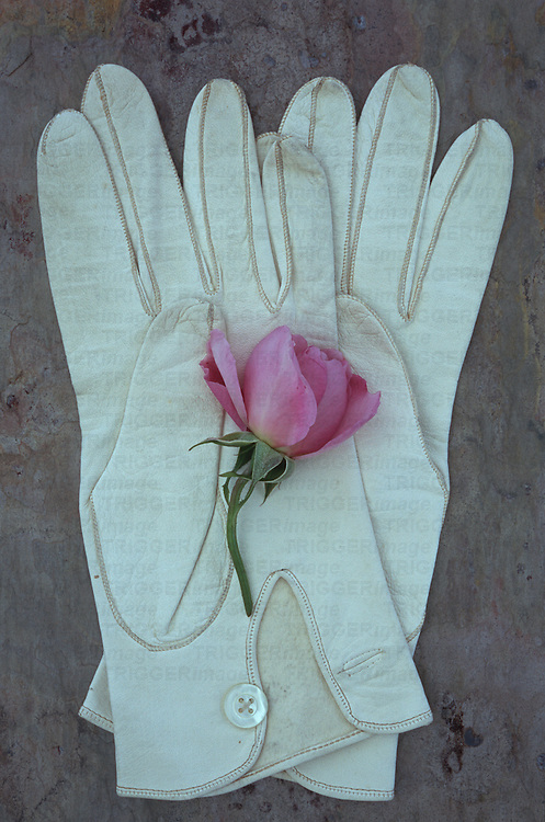 Pair of soft white leather ladies gloves with mother-of-pearl buttons lying on marbled stone with pale pink rose