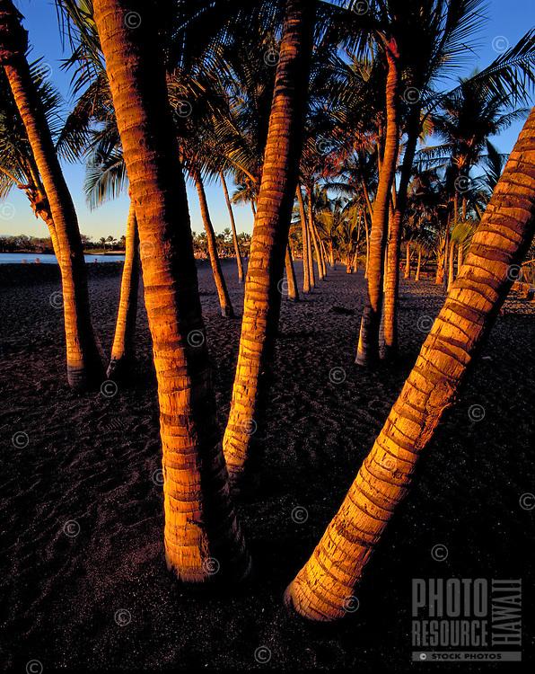 Striking photo of palm tree trunks in black sand at Ahaehoomalu Bay, Big Island