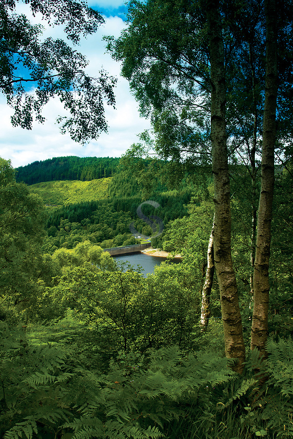 The Great Trossachs Forest, Glen Finglas Estate, Loch Lomond and the Trossachs National Park, Stirlingshire