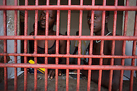"Adriano Cardoso, 25 years old ( on right ) and Vladimiro Gomes 38 years old ( on left ) ,spend time  in one of the cells of the Guinea Bissau ""Policia Judiciaria"" in charge of prosecuting drug crimes in the country,  on Saturday Sept 15 2007.///..Guinea Bissau is infamous for its cocaine trafficking. in 2005 Colombian cartels begun to arrive in the country transforming it into a Narco State. Up to 5 tons of pure cocaine are estimated to be arriving in the country every week. Guinea Bissau is the 5th poorest country in the world, making it the ideal transit base for the cocaine that will finish on the european markets. Corruption and involvement in the trafficking are present at every level of its institutions..Guinea Bissau is only one of the countries in West Africa involved in cocaine trafficking. Tons of Cocaine have been seized in Nigeria, Senegal, Ghana and  Sierra Leone."