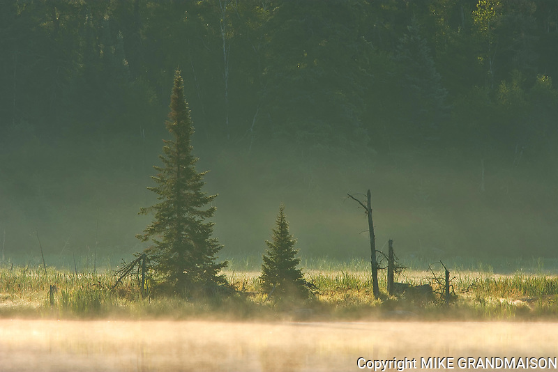 Wetland and boreal forest in morning fog<br />