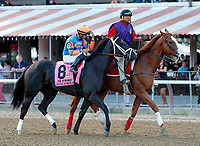 Guacamole in the post parade as Sippican Harbor (no. 6) wins the Spinaway Stakes (Grade 1), Sep. 1, 2018 at the Saratoga Race Course, Saratoga Springs, NY.  Ridden by  Joel Rosario, and trained by Gary Contessa, Sippican Harbor finished 2 lengths in front of Restless Rider (No. 11).  (Bruce Dudek/Eclipse Sportswire)