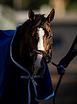 OCT 29: Breeders' Cup Turf entrant Bricks and Mortar, trained by Chad C. Brown,  at Santa Anita Park in Arcadia, California on Oct 29, 2019. Evers/Eclipse Sportswire/Breeders' Cup