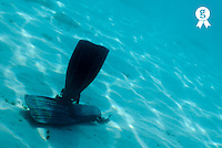 Flippers on seabed, underwater view (Licence this image exclusively with Getty: http://www.gettyimages.com/detail/200482590-001 )