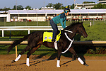 April 27, 2019 : Win Win Win works out  at Churchill Downs, Louisville, Kentucky, preparing for a start in the Kentucky Derby. Owner Live Oak Plantation, trainer Michael J. Trombetta. By Hat Trick x Miss Smarty Pants (Smarty Jones) Mary M. Meek/ESW/CSM