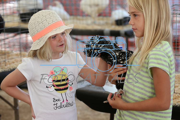 Sarah Gray, 6, left, checks out Sarah Scott's Polish banta Fluffy at the NV150 Fair at Fuji Park, in Carson City, Nev., on Friday, Aug. 1, 2014.<br /> Photo by Cathleen Allison