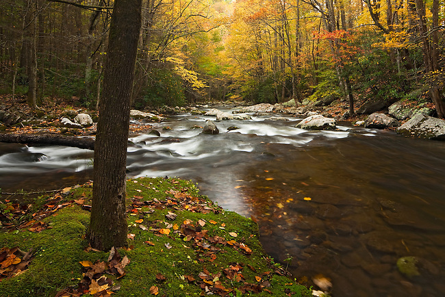 Middle Prong and Lynn Camp Prong convergence in autumn, Tremont