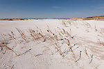 Dry lakes or ephemeral lakebeds consisting of fine-grained sediments infused with alkali salts. They are also called salt pans, pans, hardpan or salt flats. (remnants of salt lakes).