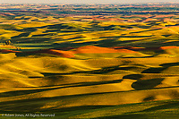 Expansive view of rolling hills of wheat crops at sunrise, from Steptoe Butte, Palouse region of eastern Washington.