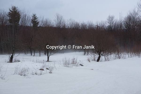 Apple trees are surrounded by fog rising as the snow evaporates on a warm spring day