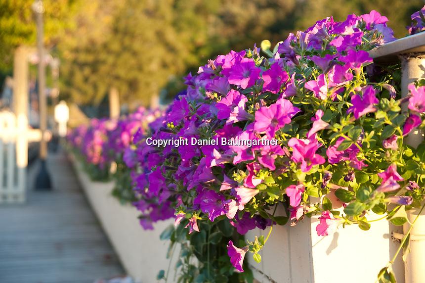 Boardwalk Flowers