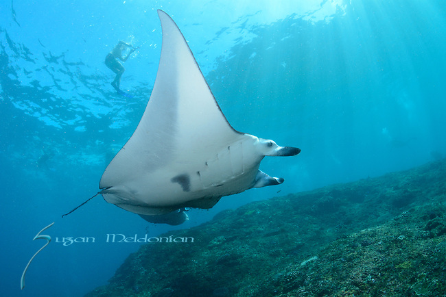 Manta Ray, Nusa Penida, Indonesia with Nicki Wirawan,