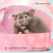 Xavier, ANIMALS, photos+++++,SPCHHAMSTER145,#a# ,funny