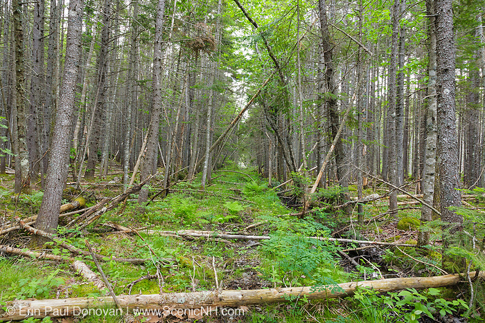 Pemigewasset Wilderness - Remnants of the East Branch & Lincoln Railroad bed in the area of Stillwater Junction in Lincoln, New Hampshire. This section of railroad led to Camp 19. This was a logging railroad, which was in operation from 1893-1948.