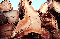 Illegal logging seized by IBAMA, Brazilian Institute of Environment and Renewable Natural Resources (Instituto Brasileiro do Meio Ambiente e dos Recursos Naturais Renováveis), the Brazilian Ministry of the Environment's administrative arm. Amazon, Brazil.