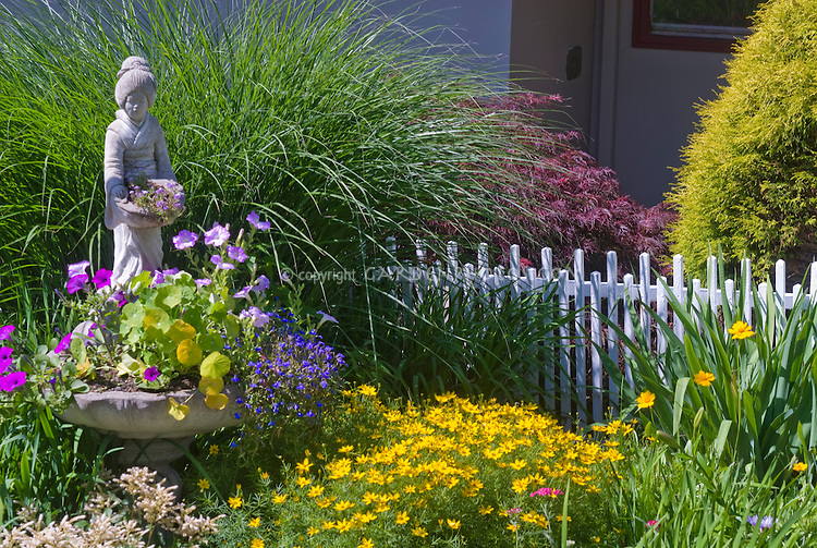Oriental woman figure statue, ornamental Miscanthus grass,  heirloom and old-fashioned Coreopsis yellow flowers, Astilbe pink blooms, white picket fence, Japanese maple Acer palmatum, evergreen tree, house, container planter of petunias, lobelia, nasturtiums