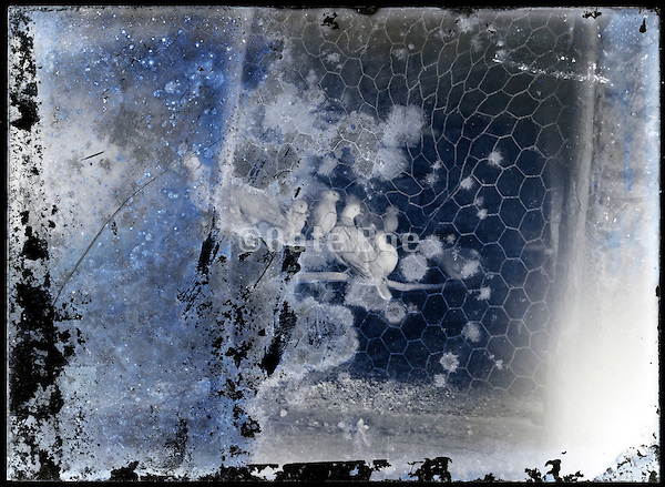 eroding glass plate photo of metal wire fence with doves