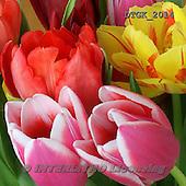 Gisela, FLOWERS, BLUMEN, FLORES, photos+++++,DTGK2014,#f#