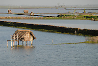"Asien Suedasien Bangladesh , Dorf Vacotmari , Shrimpsfarmen versalzen die Boeden und machen das Land fuer den Reisanbau unfruchtbar -  Landwirtschaft aquakultur Garnele Shrimps xagndaz | .South asia Bangladesh , shrimp farming in Khulna District - aquaculture shrimp salinization .| [ copyright (c) Joerg Boethling / agenda , Veroeffentlichung nur gegen Honorar und Belegexemplar an / publication only with royalties and copy to:  agenda PG   Rothestr. 66   Germany D-22765 Hamburg   ph. ++49 40 391 907 14   e-mail: boethling@agenda-fototext.de   www.agenda-fototext.de   Bank: Hamburger Sparkasse  BLZ 200 505 50  Kto. 1281 120 178   IBAN: DE96 2005 0550 1281 1201 78   BIC: ""HASPDEHH"" ,  WEITERE MOTIVE ZU DIESEM THEMA SIND VORHANDEN!! MORE PICTURES ON THIS SUBJECT AVAILABLE!!  ] [#0,26,121#]"